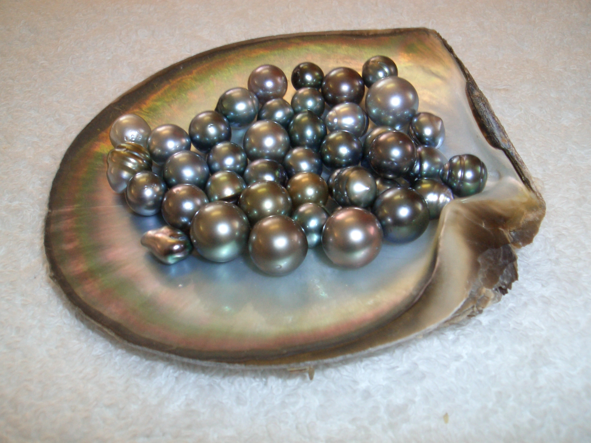 selection black holds photo of fiji stock a raw lip pearls oyster hands